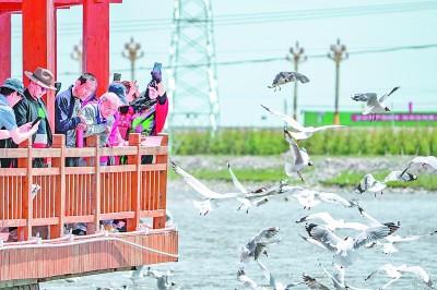 守护青海湖湟鱼重生的力量