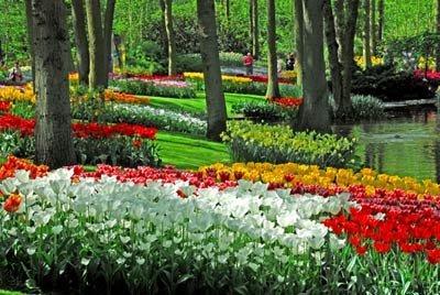 库肯霍夫郁金香公园 据传这个地方15世纪时原本是一位女伯爵的狩猎领地,当时女伯爵在后院种植了蔬果草药等烹调食用的植物,而将这个地方命名为库肯霍夫(Keukenhof)。1830年荷兰聘请德籍的景观园艺家,设计库肯霍夫公园的蓝图,公园整体的景观设计以英式的风格为主,蜿蜒的林径、幽静的水池、喷泉交织着一丛丛的花圃,导览游客参观各式各样盛开的花卉。一直到1949年,一群花农为创造一个开放空间式的花卉展览场地,于是计划将库肯霍夫这个地方规划成可以让花朵自然生长、吐蕊的花园。 责编:闫冬
