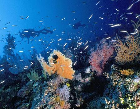壁纸 海底 海底世界 海洋馆 水族馆 450_350