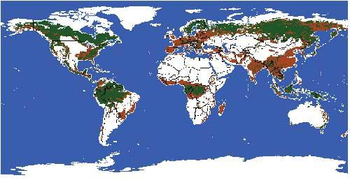 森林超详细高清地图