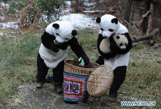 Wolong panda center re...