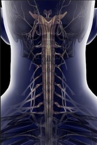 颈部脊柱、神经