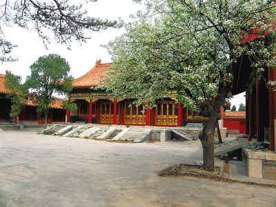 寿康宫:正殿前两树梨花开得正盛。记者杨一枫摄