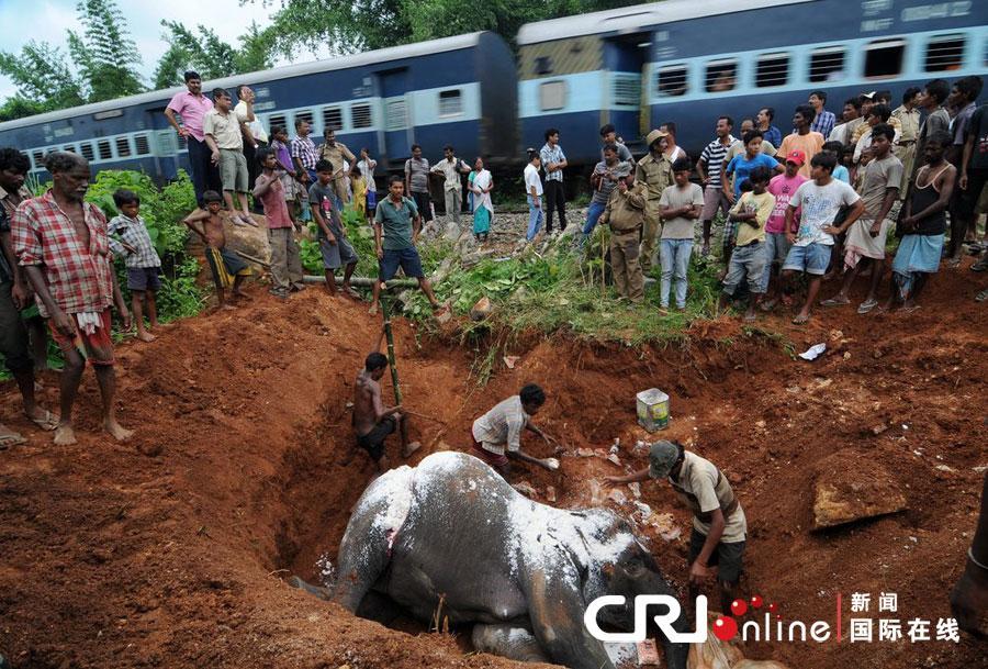 印度大象觅食与火车相撞 不幸丧命组图 粤语