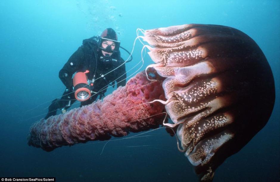 大洋深处极其罕见的绝美生物 粤语台