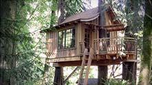 令人向往的树屋旅店