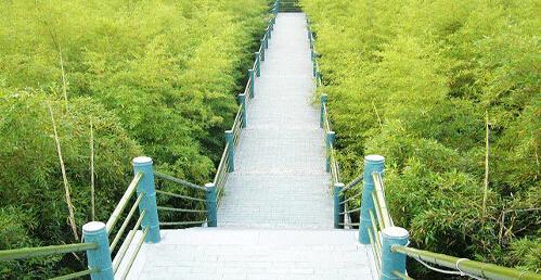 安吉竹产业之竹旅游业发展方面