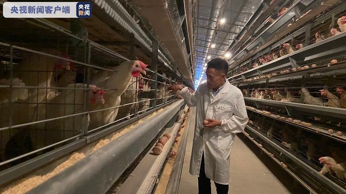 《【恒达平台怎么注册】抱团发展新模式17个村联合养殖蛋鸡脱贫致富》