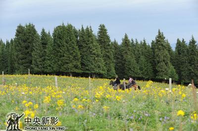 壁纸 成片种植 风景 花 植物 种植基地 桌面 400_266