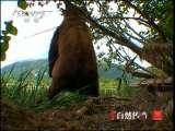 自然传奇春节特别节目 动物王国历险记(4)