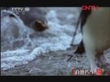 《自然传奇》 20120123 动物生存大揭秘(二)