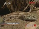 动物生存大揭秘(十)[自然传奇] 20120201
