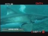 动物猎杀现场(一)[自然传奇] 20120222