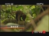 """《地理中国》 20120425 """"世界地球日""""特别节目《地球家园》——密林追踪"""