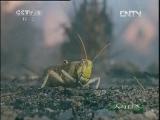 《人与自然》 20120523 自然发现:自然的威力——天火(上)