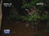 [视频]南京军区72小时特侦演练打造侦查尖兵