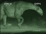 《人与自然》 20120816 自然发现 与古兽同行(三)