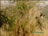 《人与自然》 20120817 自然发现 与古兽同行(四)