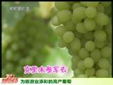 为旅游业添彩的高产葡萄