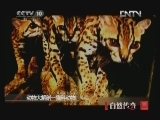 《自然传奇》 20120830 动物大解剖 猫科动物