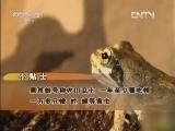 刘小林养殖黑斑蛙圆了财富梦