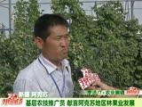 基层农技推广员 献言阿克苏地区林果业发展