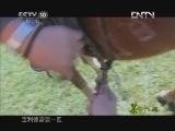 《茶叶之路》 20120925 第七十九集 那达慕(上)