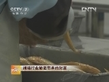 福建宁德尤信铃大黄鱼养殖:捅破行业秘密带来的财富