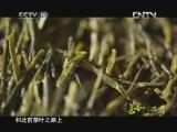 《茶叶之路(精编) 第六集 古茶遗风》 20121004