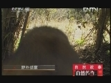 《自然传奇》 20121109  自然故事 野外侦查