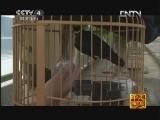 《走遍中国》20121117中国古镇(88)保宁镇:风水之城