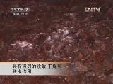 农广天地,海蜇的加工技术