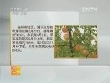 梨种植农广天地,优质晚熟红色梨品种介绍