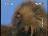 《自然传奇》 20130111 动物猜猜猜 8