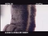 [子宫日记]猫须和触毛的作用