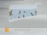 [农广天地]蟾衣的采集与加工(20130221)