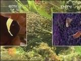 小丑鱼养殖技术