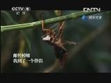 《生命的速度》 20130614 螳螂