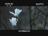 《特别呈现》 20130620 京剧 第六集 凤还巢