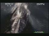 《人与自然》 20130702 自然发现:大白鲨(上)