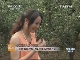 河南汪贝贝苹果醋致富经,一无所有学生妹 4年创富6000多万元