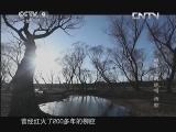 《人文地理》 20130804 田埂上的绝唱 柳腔