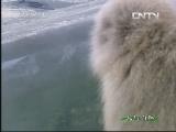 《人与自然》 20130827 自然启示:动物冬季奥运会(上)