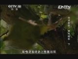 《地理中国》 20130903 地球家园-密林暗影(下)