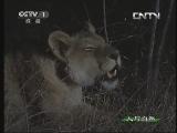《人与自然》 20130913 自然故事 豹子和疣猪的故事(下)