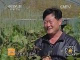 [科技苑]花盆里长出葡萄树(20140110)