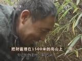 张成生天麻种植致富经,把财富埋在1500米的高山上
