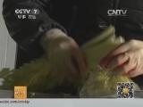 [科技苑]芹菜窖藏 身价翻番(20140128)