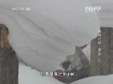 《地理中国》 20140219 奇居之地-雪乡(上)
