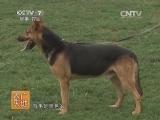 养狗技术农广天地,昆明犬驯养技术